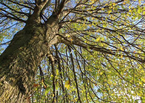Vangnetregeling 1 miljoen bomenplan