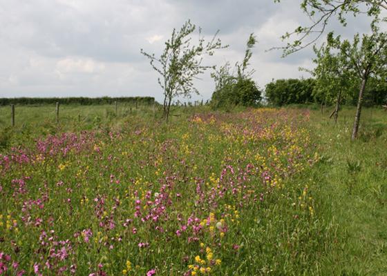Bloemenweide in Noorbeek