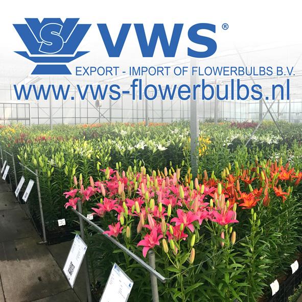 Dutch Lily Days