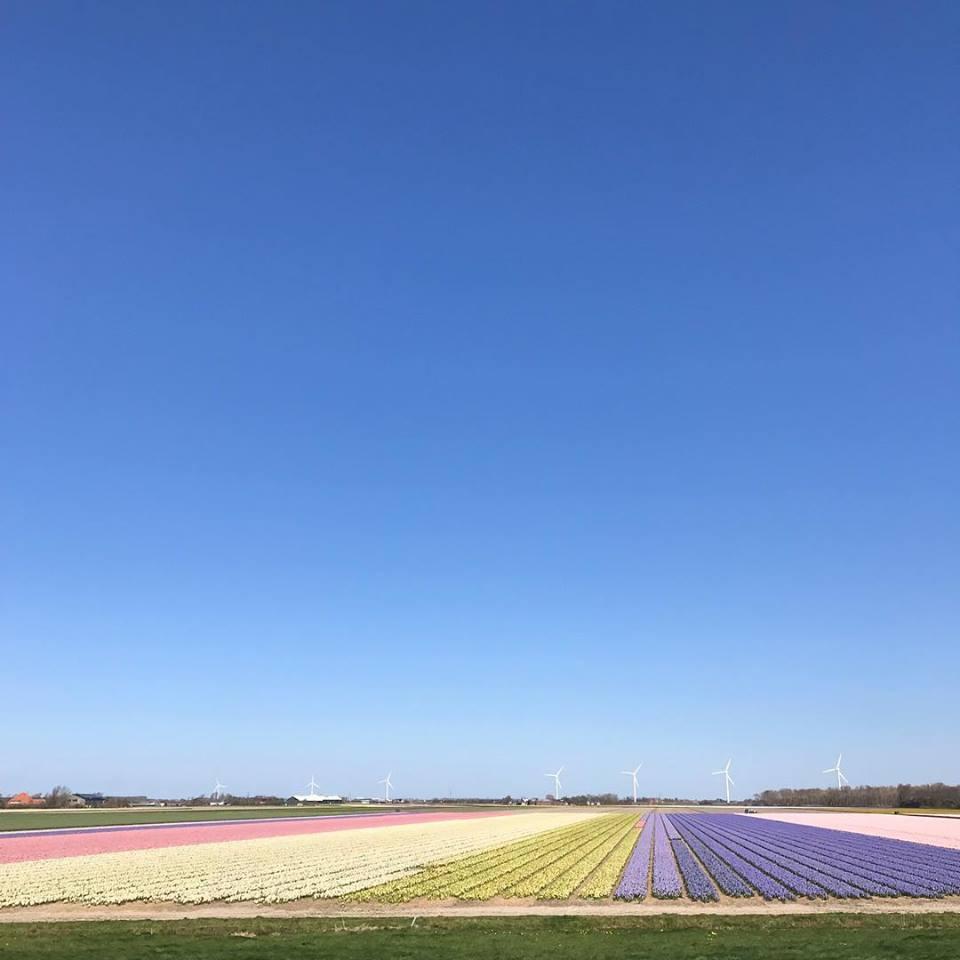 Flowerint fields