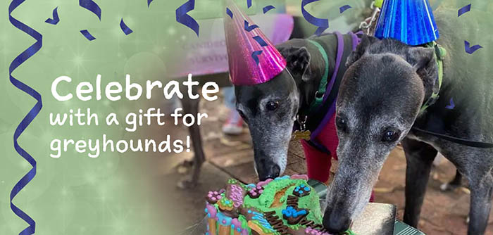 Celebrate with a gift for greyhounds