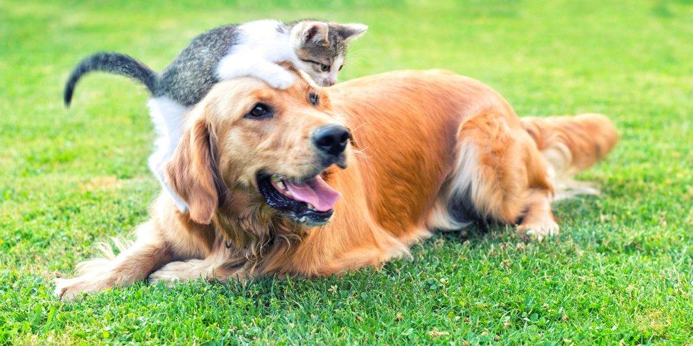 Chien et chat allongés dans l'herbe