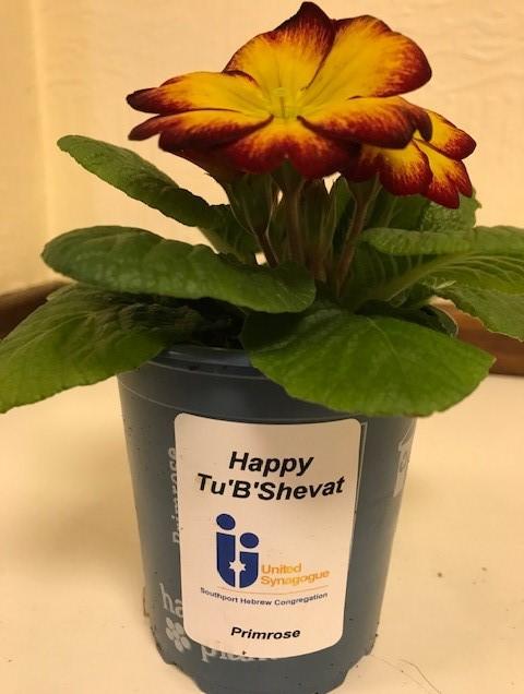 A Tu B'Shevat Gift