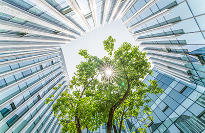 Tree growing in the centre of an office building courtyard