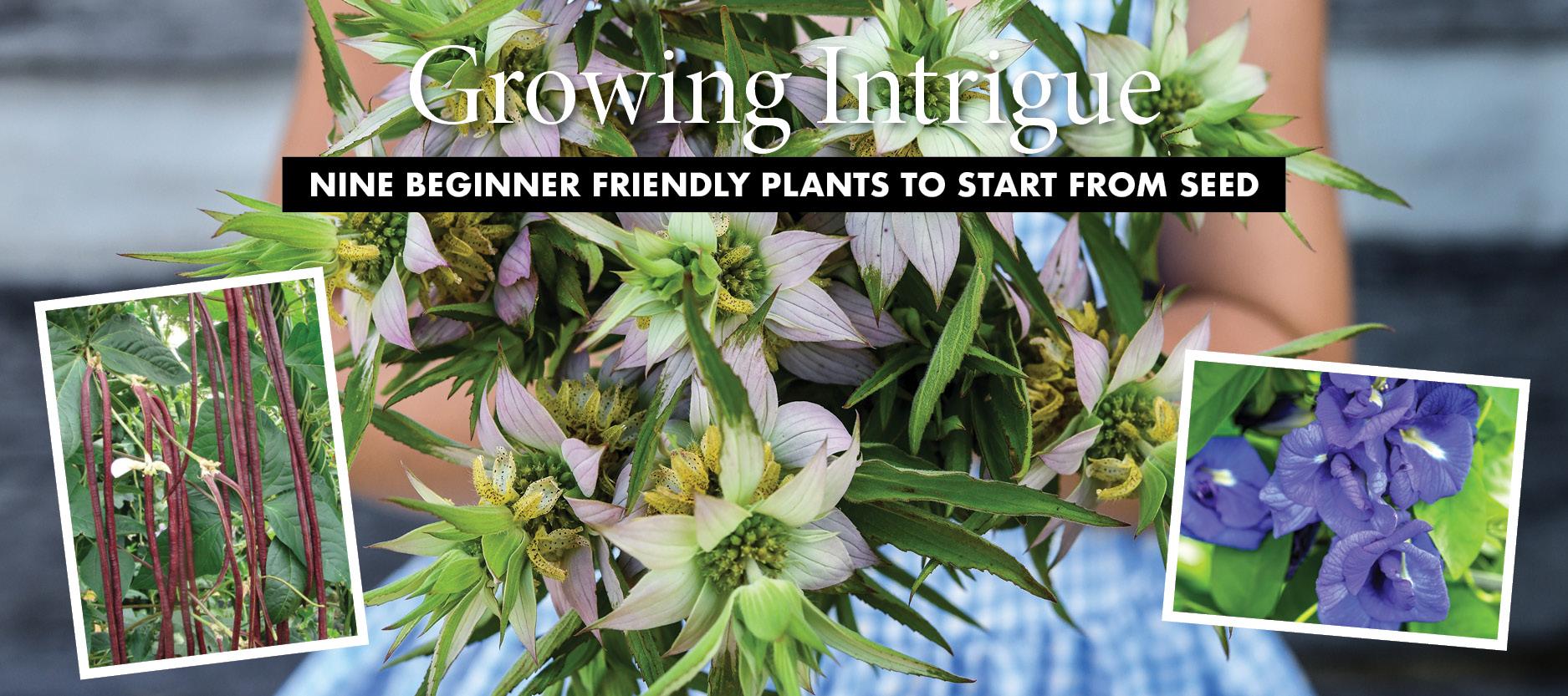 Gardening-Seeds