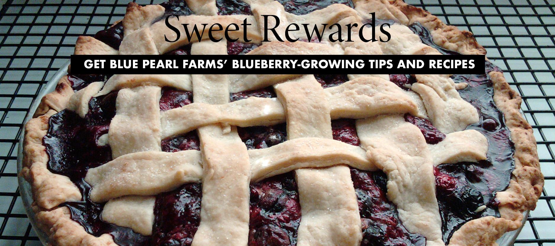 Gardening - Blueberries
