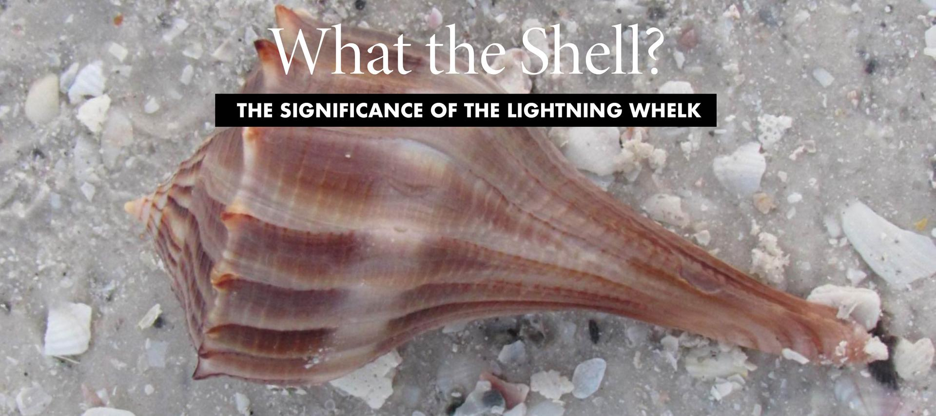 So Charleston: Lightning Whelk