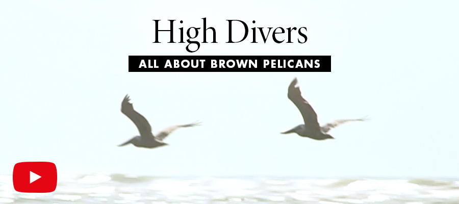 High Divers