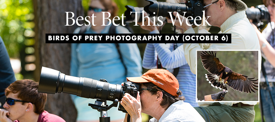 Best Bet: Birds of Prey Photography Day
