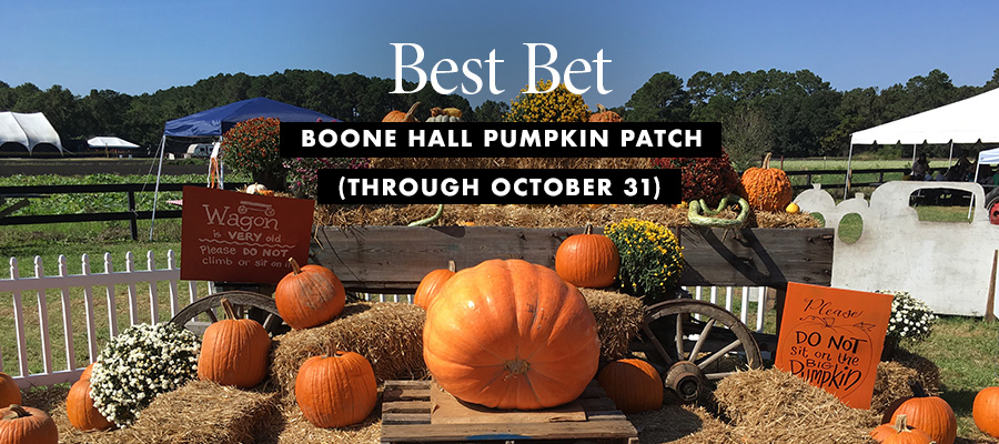 Best Bet: Pumpkin patch