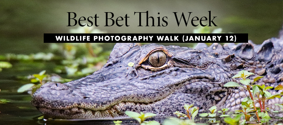 Best Bet:Wildlife Photography