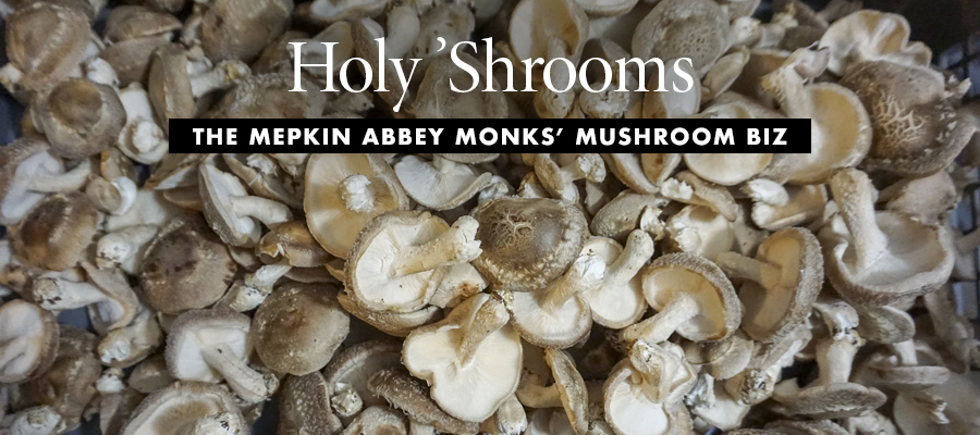 Biz-Sci-Tech - Holy 'Shrooms