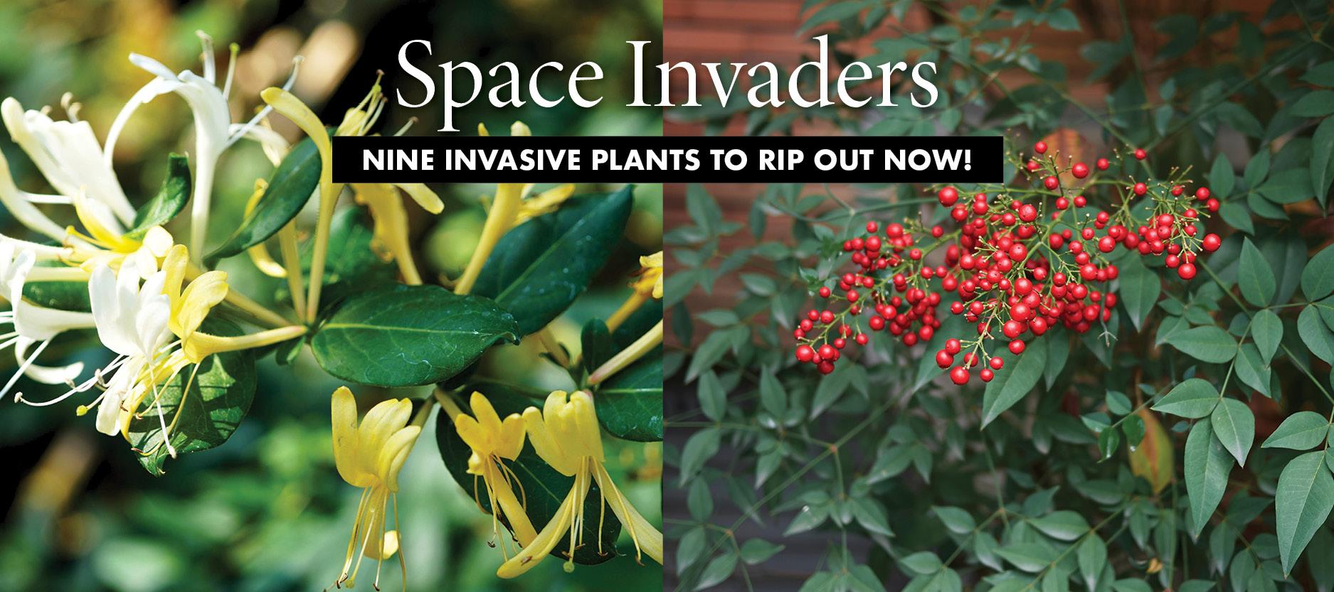 Gardening: Invasives