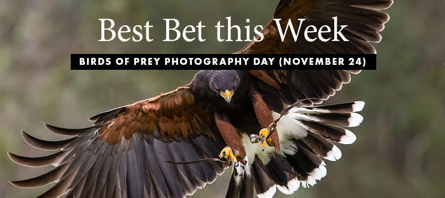 Best Bet: Birds of Prey
