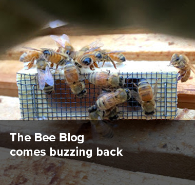 The Bee Blog comes buzzing back