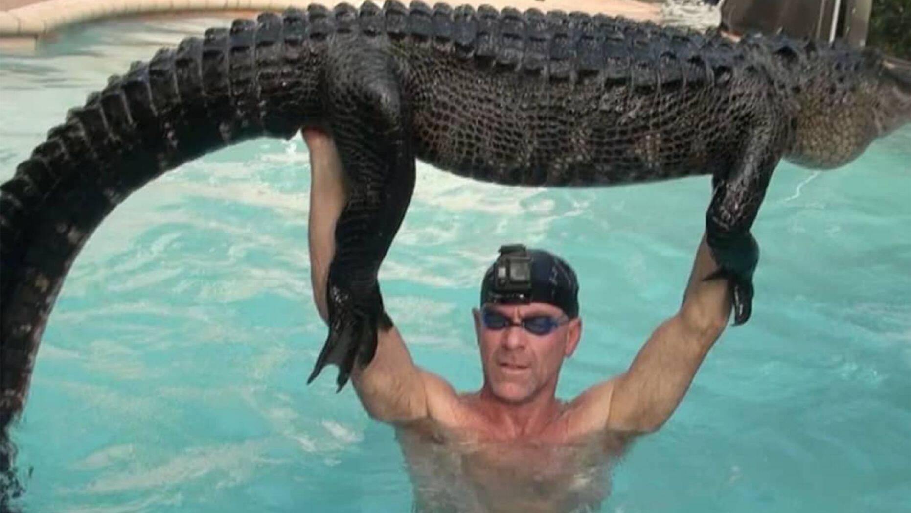Alligator wrangled in pool.