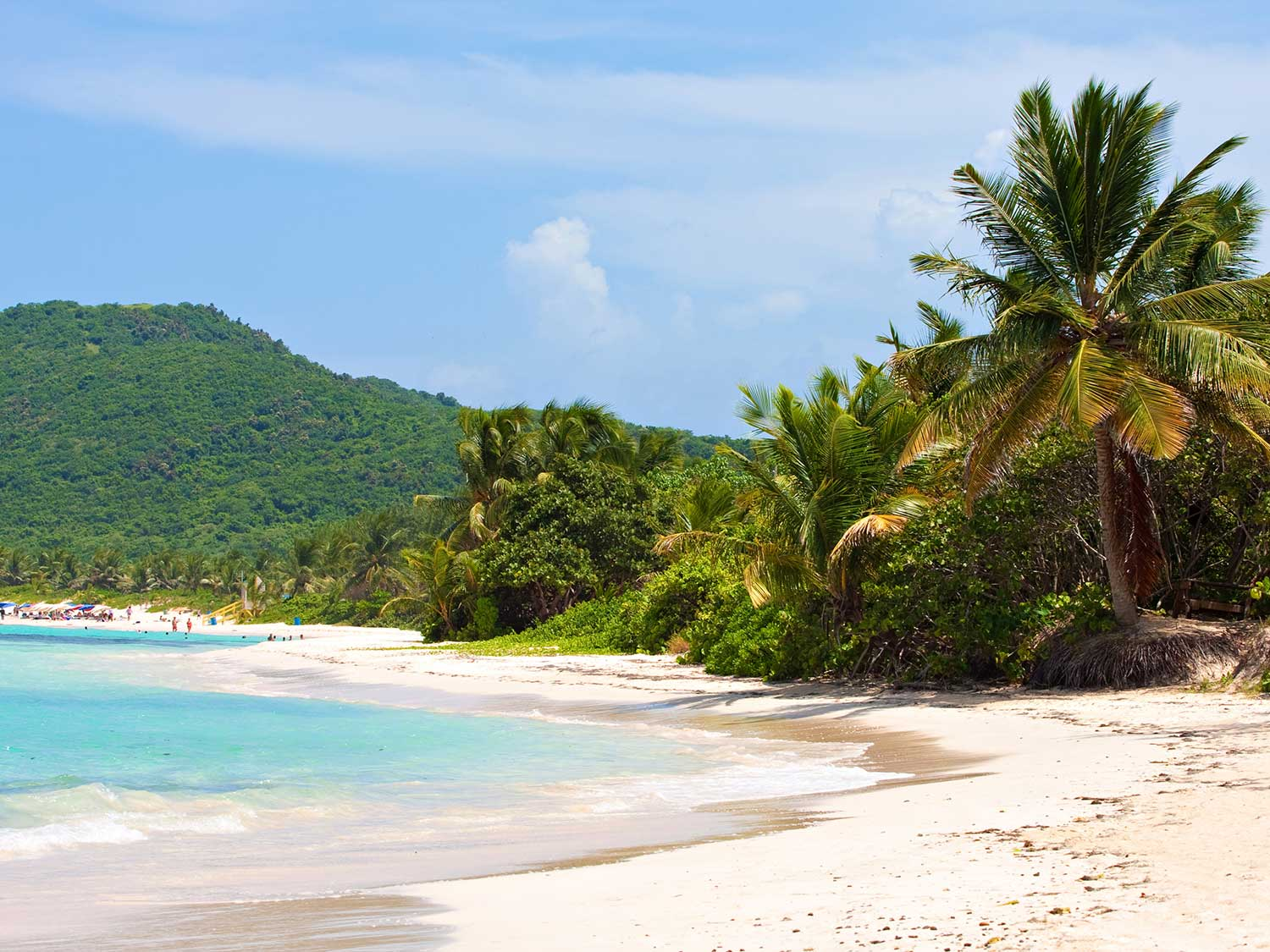 A tropical island beach lined with palms and lush greenery.