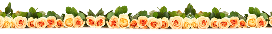 Fall-in-love-with-your-Business-again-Rose-Dividers