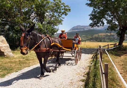 Tourisme : l'été dans les Alpes de Haute-provence (04) Sans%20titre_4