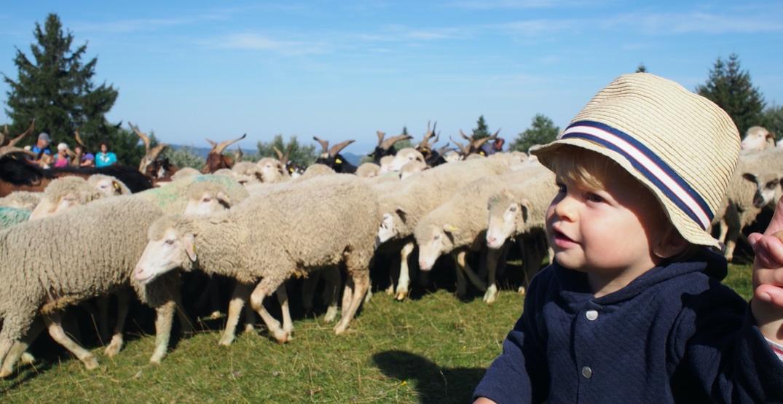 Original : le Vercors vous propose une journée avec un troupeau ! VERCORS_1