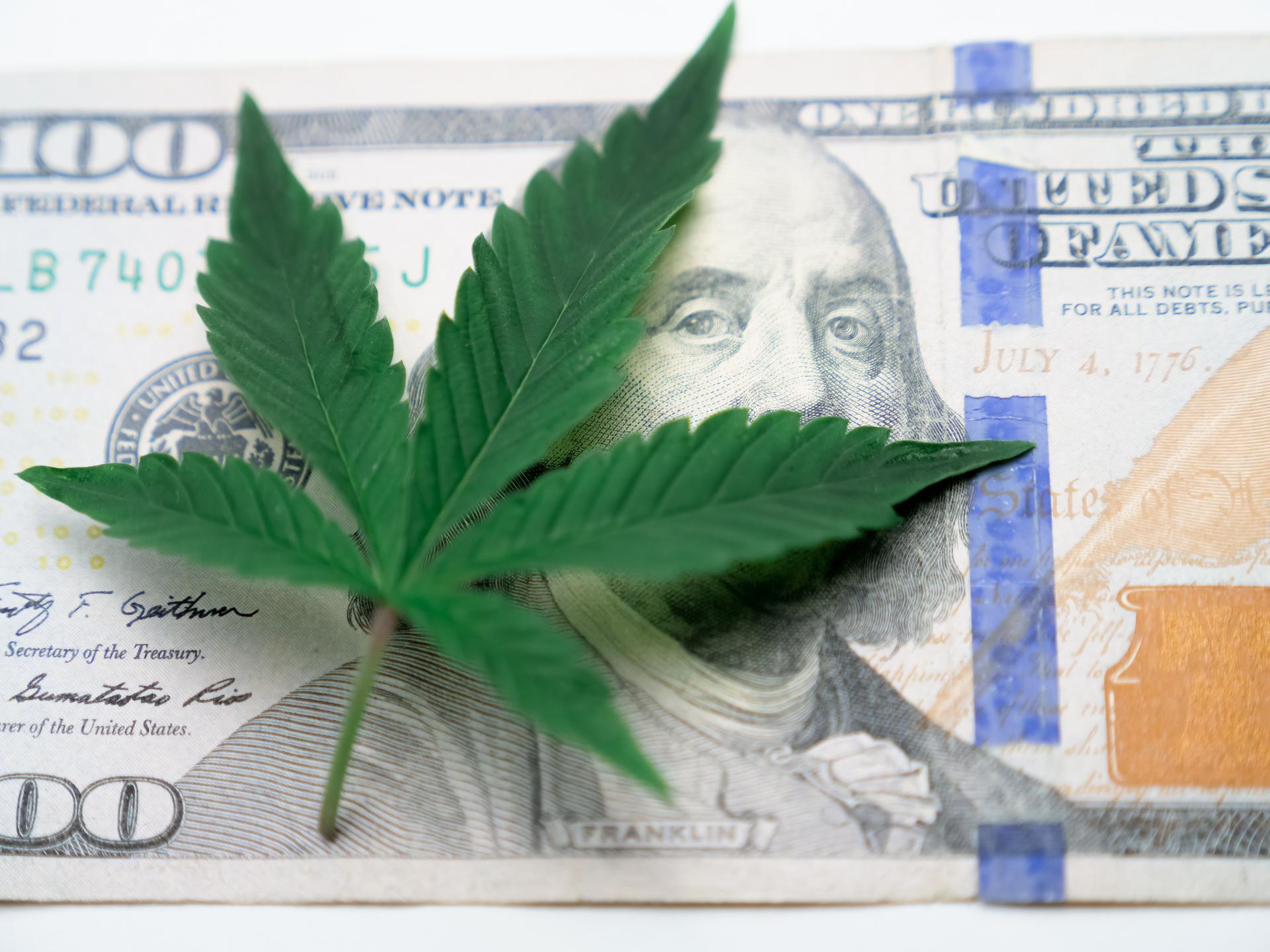 Cannabis leaf in front of dollar
