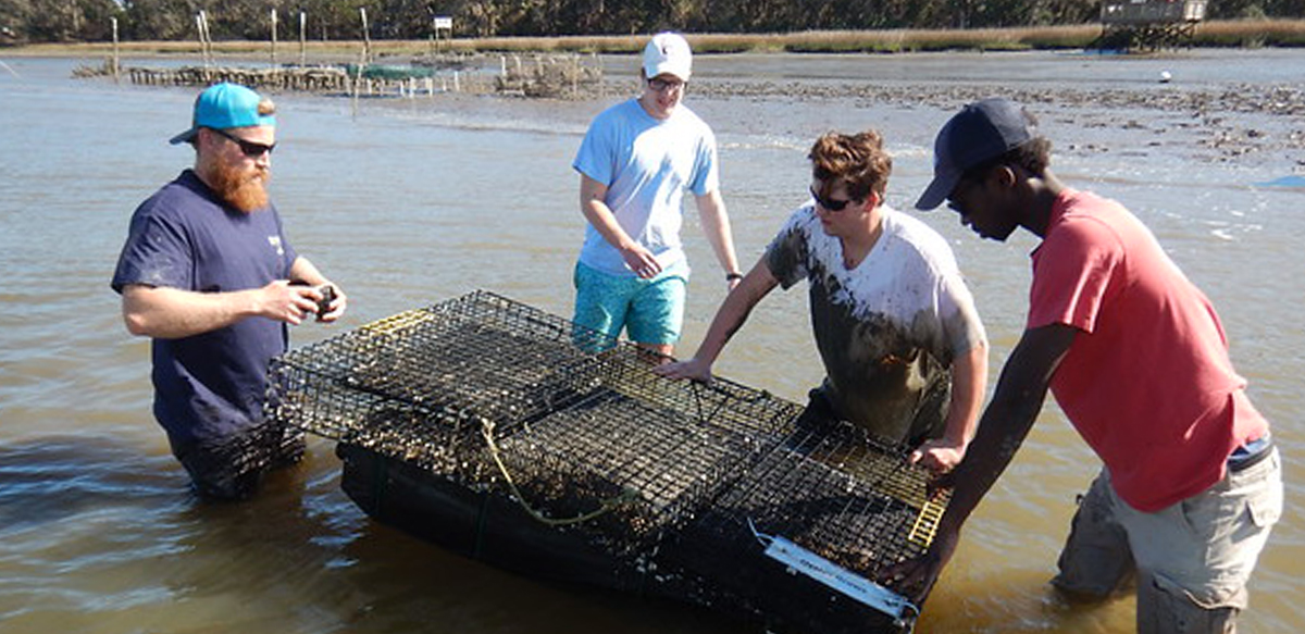 Image: oyster farming