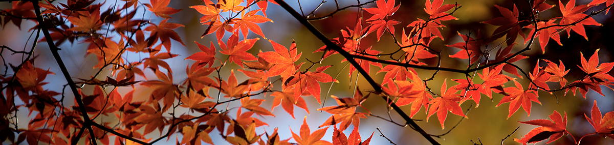red leaves in branches