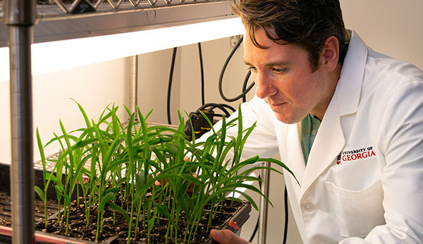 Postdoctoral research Alexandre Marand led a project that applied single-cell sequencing technology to create a reference atlas in maize, identifying multiple types of plant cells and the DNA sequences that control them at a molecular level. This innovation makes it possible to learn about cellular development in any plant species. (Photo by Amy Ware)